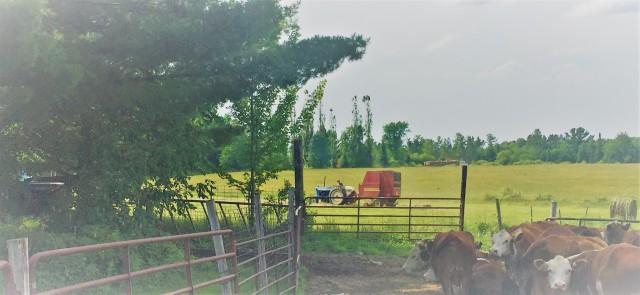 Jims farm
